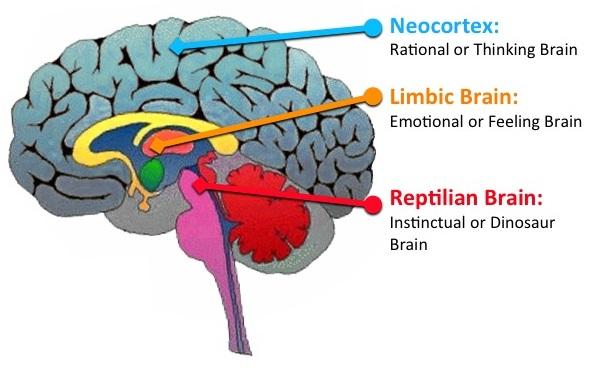 3 Brains.jpg